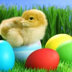 Where Do Easter Eggs Come From? [Listen Now]