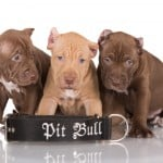 Michael Shawn Has A Problem With His Neighbors Pit Bulls! [Listen Now]
